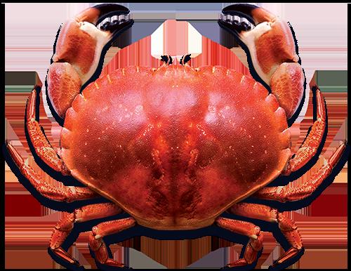 Blue Sea | Whole Crab